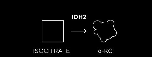normal IDH2 enzyme
